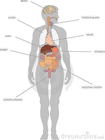 human-organs-9863643